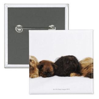 Tres perros de Pekingese y solo barro amasado que Pin Cuadrado
