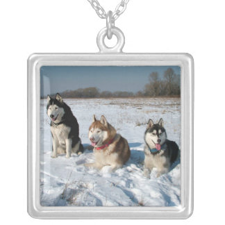 Tres perros interesantes del Malamute Colgante Cuadrado