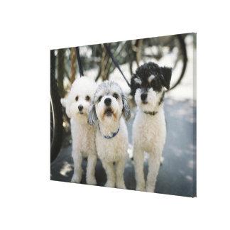 Tres perros lienzo envuelto para galerias