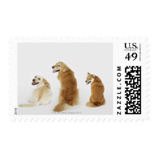 Tres perros que miran la cámara sello postal