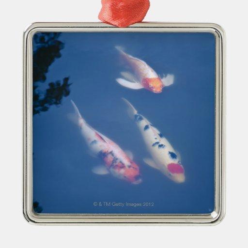 Tres pescados japoneses del koi en la charca adorno