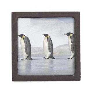 Tres pingüinos de emperador isla de la colina de cajas de joyas de calidad