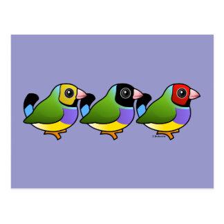 Tres pinzones de Gouldian Tarjeta Postal