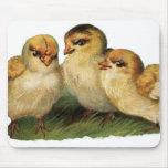 tres polluelos del bebé tapetes de ratón