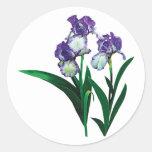 Tres púrpuras e iris blancos pegatina redonda