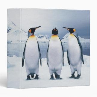 Tres rey pingüinos