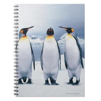 Tres rey pingüinos libretas espirales