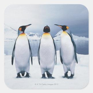 Tres rey pingüinos calcomanias cuadradas