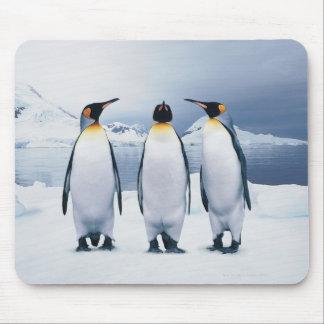 Tres rey pingüinos tapetes de raton