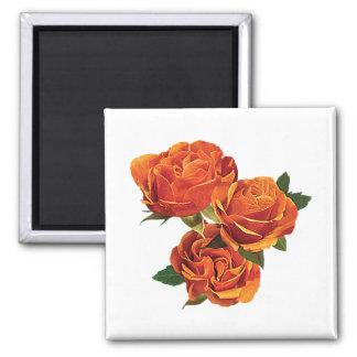Tres rosas anaranjados imán cuadrado