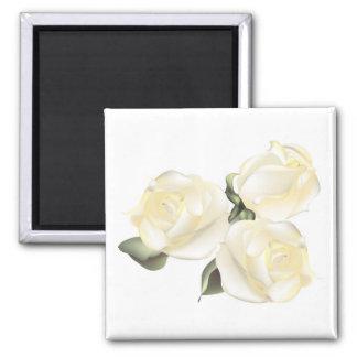 Tres rosas blancos imanes de nevera