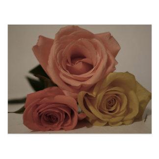 tres rosas pálidos coloreados en sombras del postales