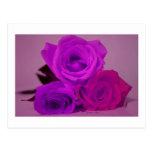 Tres rosas, púrpura teñida en una parte posterior postal