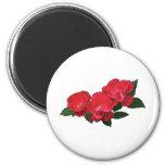 Tres rosas rojos imán de frigorífico