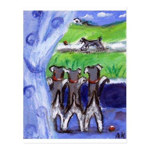 Tres schnauzers en ventana postales