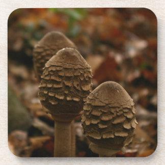 Tres setas de parasol en el bosque 1 posavasos
