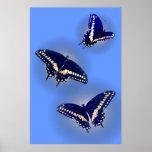 Tres Swallowtail negro Posters