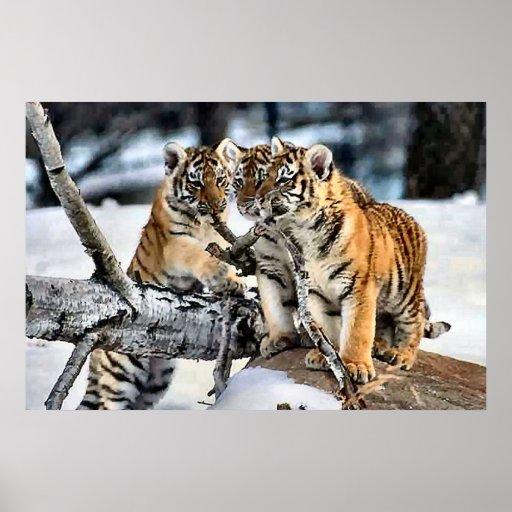 Tres tigre Cubs en regalos del arte de la nieve Posters