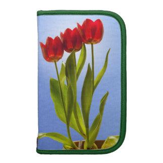 Tres tulipanes en una fila - retrato organizadores