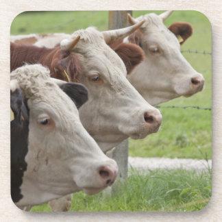 Tres vacas en prácticos de costa de un corcho de l posavasos de bebida