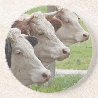 Tres vacas en prácticos de costa de una fila posavasos personalizados