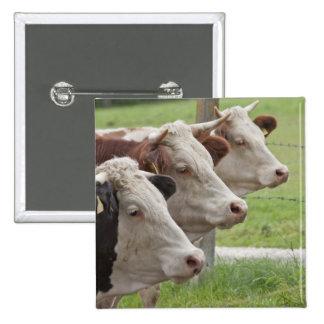 Tres vacas en un botón de la fila pin cuadrado