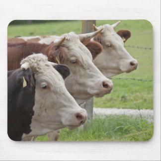 Tres vacas en una fila Mousepad