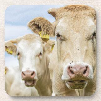 Tres vacas marrones posavasos