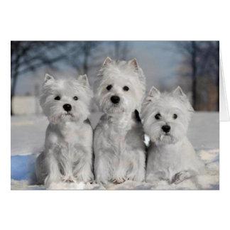 Tres Westies en la nieve Tarjeta De Felicitación