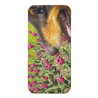 Tri Collie N the Tulips iPhone4 case