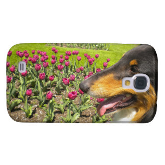 Tri Collie N the Tulips S4 case