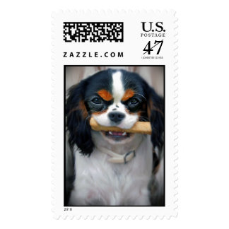 Tri Color Cavalier King Charles Postage