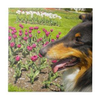 Tri-color Collie N Tulips Tile Trivet tile