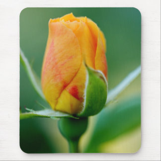 Tri-Color Rosebud: Peach Hints of Red & Yellow Mouse Pad