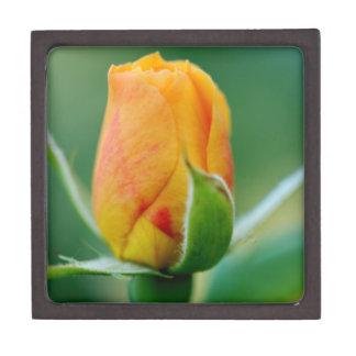 Tri-Color Rosebud: Peach Hints of Red & Yellow Premium Gift Box