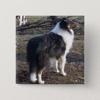 Tri-color Rough Collie Button