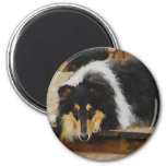 Tri-Color Rough Collie Gifts 2 Inch Round Magnet