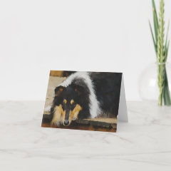 Tri Color Rough Collie Gifts Art card