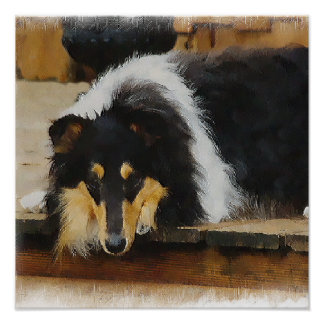 Tri Color  Rough Collie Gifts Art Poster