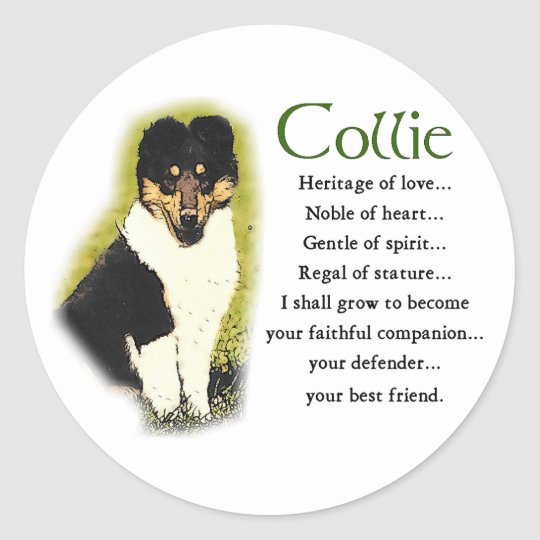 Tri Color Rough Collie Gifts Classic Round Sticker