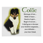 Tri Color Rough Collie Gifts Print