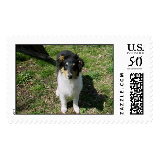 Tri-Color Rough Collie Puppy Postage