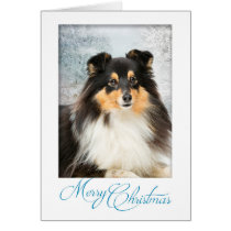 Tri-Color Sheltie Christmas Card