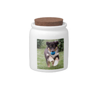 Tri Colored Australian Shepherd Pup Candy Jars