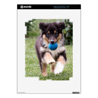 Tri Colored Australian Shepherd Pup Decal For iPad 2