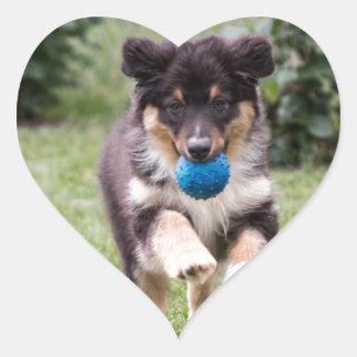 Tri Colored Australian Shepherd Pup Heart Sticker