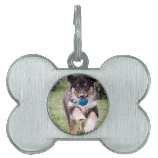 Tri Colored Australian Shepherd Pup Pet Tag
