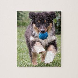 Tri Colored Australian Shepherd Pup Puzzle