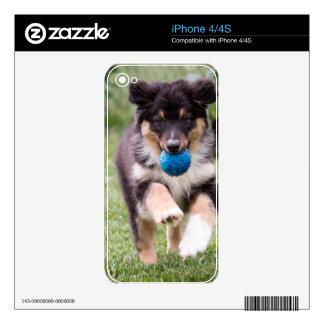 Tri Colored Australian Shepherd Pup Skin For iPhone 4