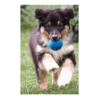 Tri Colored Australian Shepherd Pup Stationery